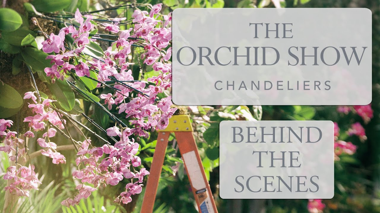 The orchid show chandeliers behind the scenes youtube the orchid show chandeliers behind the scenes mozeypictures Gallery