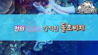 보홀 다이빙투어 ㅣ 돌호 포인트 ㅣ 산호의 천국 2018 [스쿠버다이빙/scubadiving/코브라다이브]2018_09_doljo tour