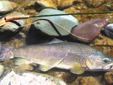 Fly Fishing New Zealand - Fly Casting - Fly Design - Interview with NZ Fly Fishing Legend Stu