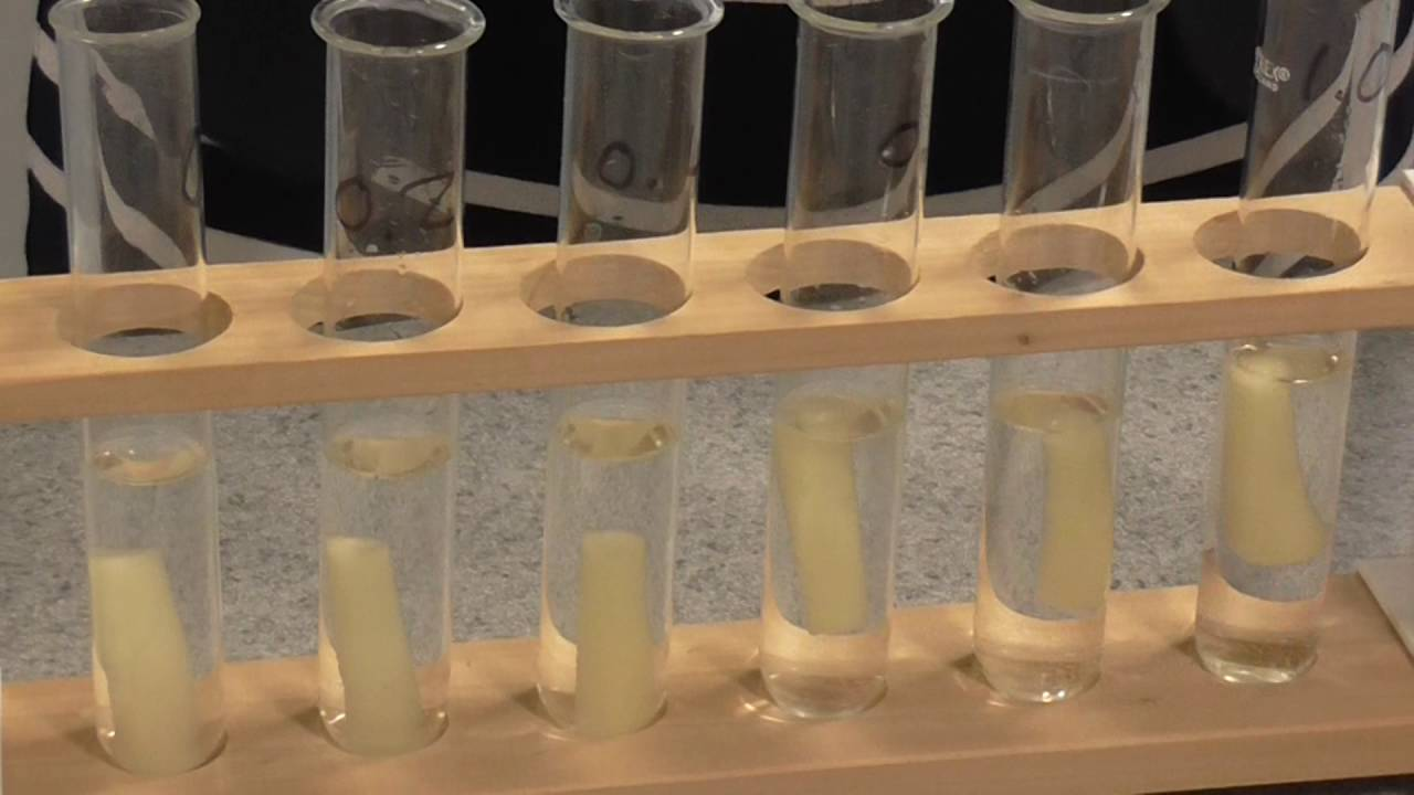 osmosis potato tuber lab Osmosis in potato tuber cell the weighting method biology essay aim: to determine solute potential of a plant tissue at 20 ºc research question:.