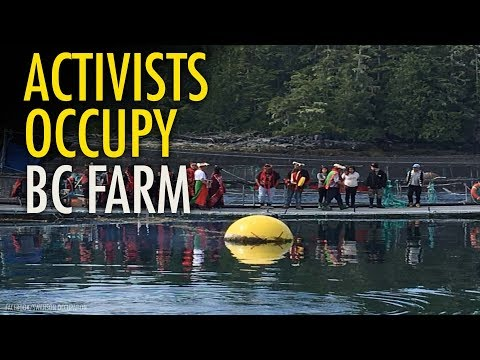 Eco-radicals behind illegal occupation of BC salmon farm unmasked