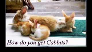 Cabbits