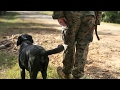 Military Working Dogs Training