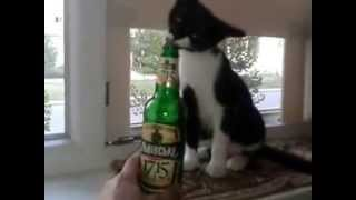 кот пьет пиво из бутылки