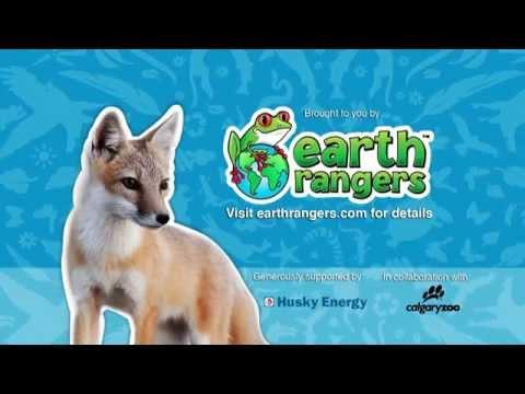 Help Protect the Swift Fox