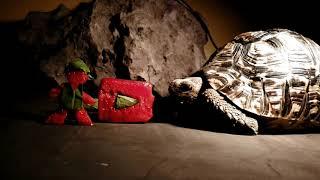 Download tortoise eat youtuber toxic