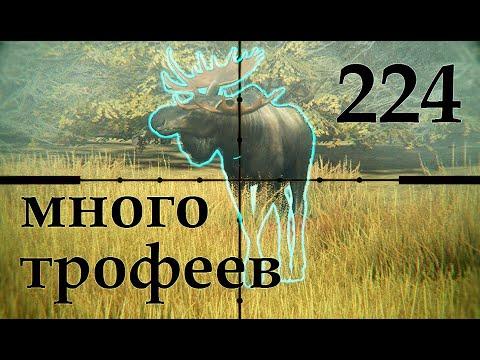 МНОГО ТРОФЕЕВ theHunter Call of the Wild # 224