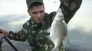 Ловля карповых на р.Обь (ловля леща) фидер #ru_kompass #fishing #рыбалка