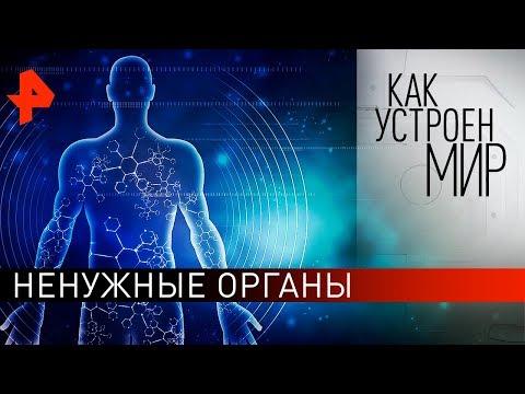 """Ненужные органы. """"Как устроен мир"""" с Тимофеем Баженовым (05.11.19)."""