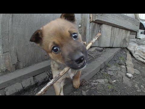 Little puppies bite me