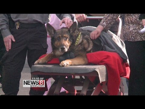 Thumbnail: Police dog put down after one final ride in squad car