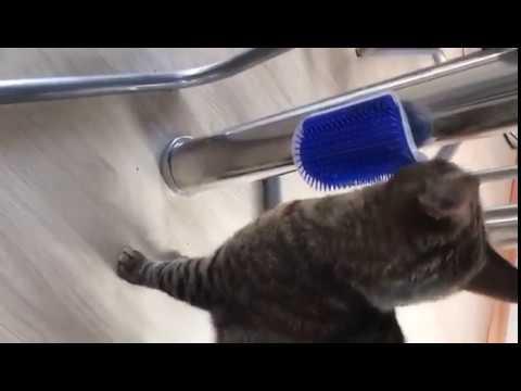 Tommy testet: Catit Self Groomer Massage Ecke mit Catnip | Mein Katzenblog.de