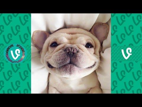 Funny Animal Vine Compilation 2017
