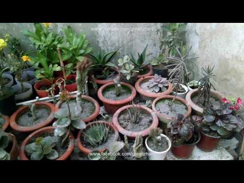 Kitchen Garden Overview | What to Plant in Garden | Garden in Home Ideas(urdu/hindi)
