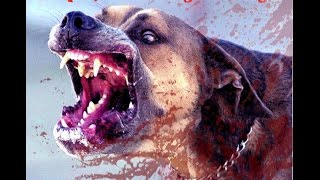 Most Aggressive Dog Breeds in the World | Most Dangerous Dog Breeds | Top 19