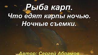 Рыба карп. Что едят карпы ночью. Ночные съемки.(Рыба карп http://abramov-2110.ru/ryba-karp/ry-ba-karp самая привлекательная рыба для разведения в приусадебном водоеме. Карпы..., 2015-03-05T12:19:11.000Z)