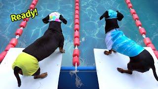 The Wienerlympics!  Cute & Funny Wiener Dog Video!