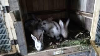 Начали дохнуть маленькие кролики