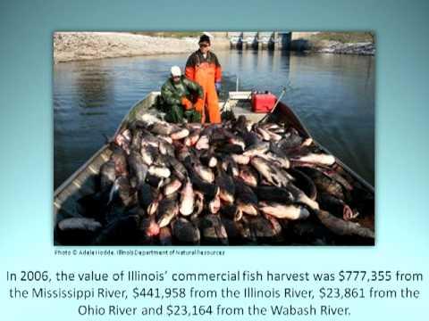 Rivers Of Illinois: Economic Impacts On Local Communities