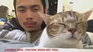 Лучший Coub 2015 Кот качает головой под русский рэп