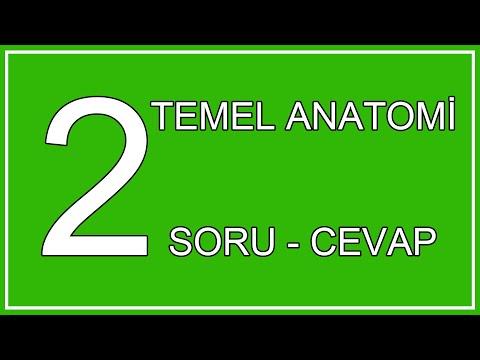 2#SORU-CEVAP(Kaslar'ın Başlangıcından,Ön Kol Kaslarına Kadar)