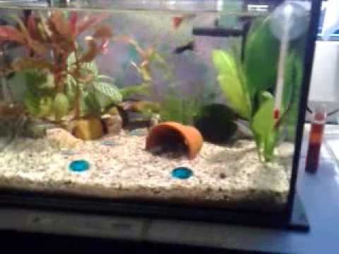 mein 10 liter nano aquarium neue einrichtung