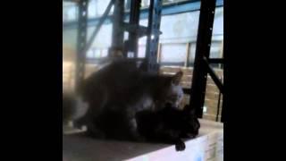 Video bokep  kucing download MP3, 3GP, MP4, WEBM, AVI, FLV November 2017