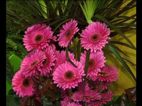 bloemenpracht aalsmeer international flower show uitz. 20 juli 2000