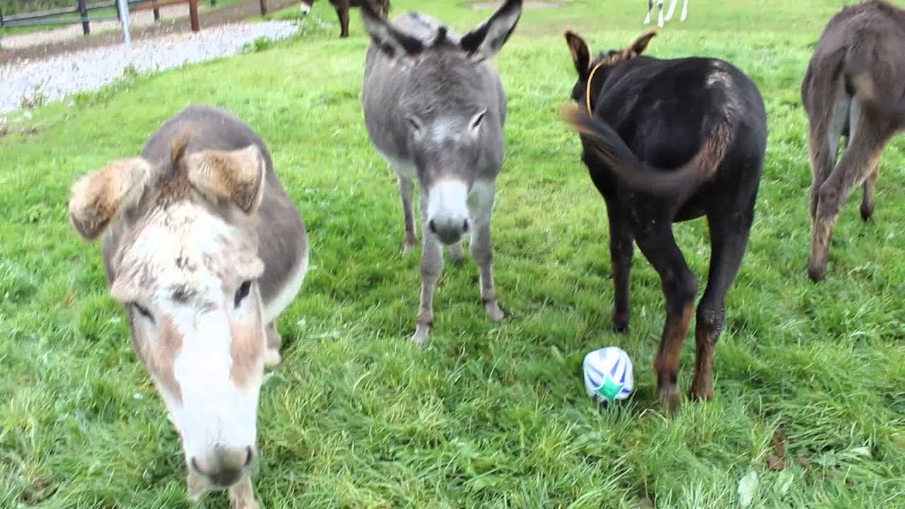 Adoption Donkeys And Baby Foals