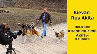 Американская Aкита. О породе и питомнике Kievan Rus Akita в Украине