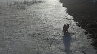 Пару минут с рыбаком или прогулка по зимнему льду