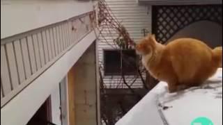 Funny Animals Jump fail