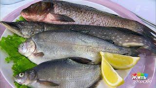 Экспертиза речной рыбы. Жить здорово! 28.05.2019
