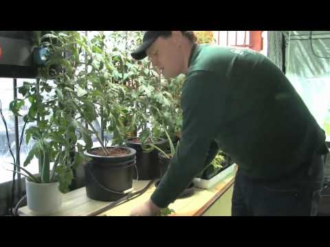 Hydroponics Gardening Brampton Mississauga Advanced Indoor Gardening by Second Nature ON
