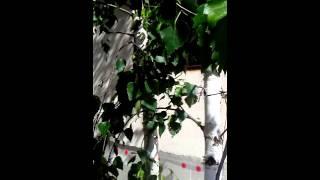Декоративная штукатурка, после нанесение Казань п.(, 2016-02-06T10:59:32.000Z)