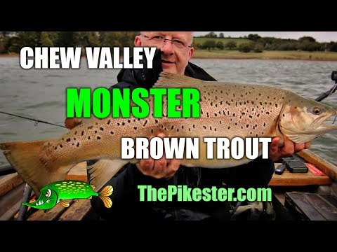 Chew Valley Lake Monster Brown Trout