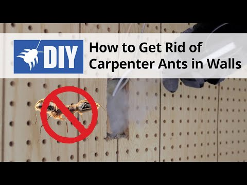 Full Download Pest Control How To Get Rid Of Invasive