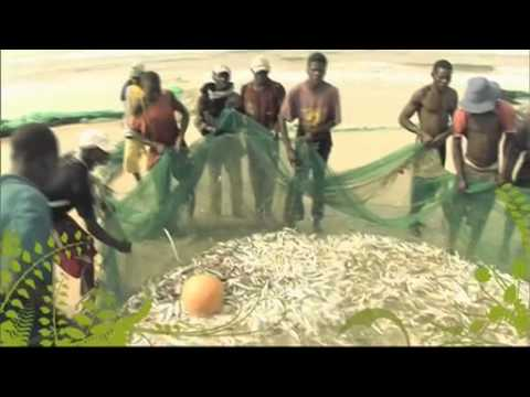 The Business of Food - Mozambique: The Best Catch