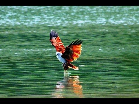 Maritime Eagles - Slideshow