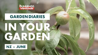 Gardening in June | New Zealand | Bunnings Garden Diary