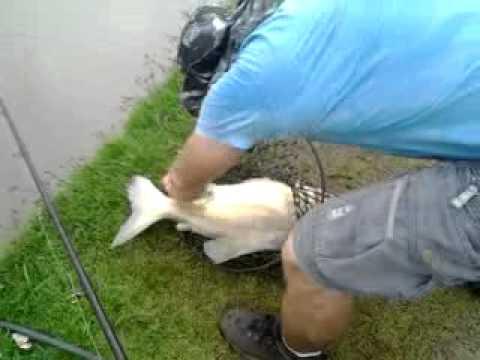 Pesca Esportiva - Pesqueiro Baratão Em Inhumas-GO