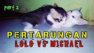 Download Video PERTARUNGAN ANAK KUCING LIAR MP3 3GP MP4