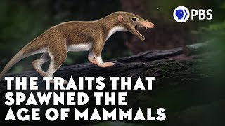 The Traits That Spawned the Age of Mammals