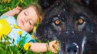 ВОЛЧЬЯ ВЕРНОСТЬ! Трогательная история до слез! Эту историю мне рассказал знакомый охотник.