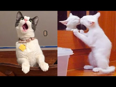 Try Not To Laugh or Grin While Watching Funny Animals Compilation #36