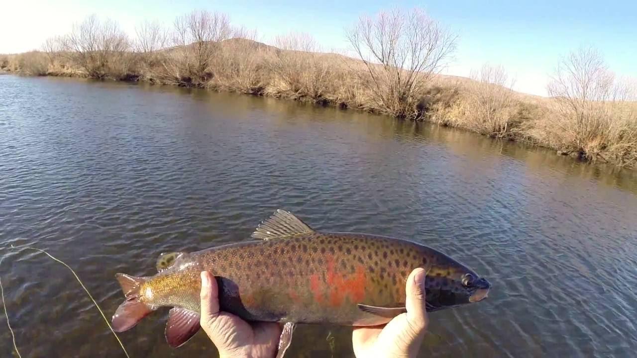 Fly fishing for lenok and taimen doovi for Taimen fishing mongolia