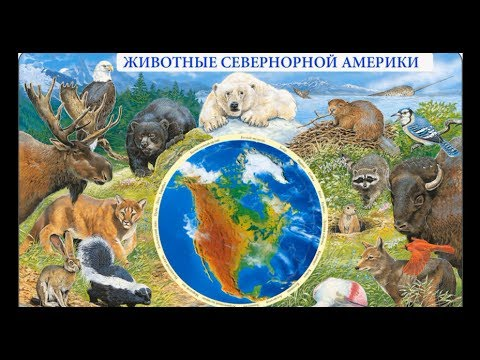 Карта США Карта Соединенных Штатов Америки Названия
