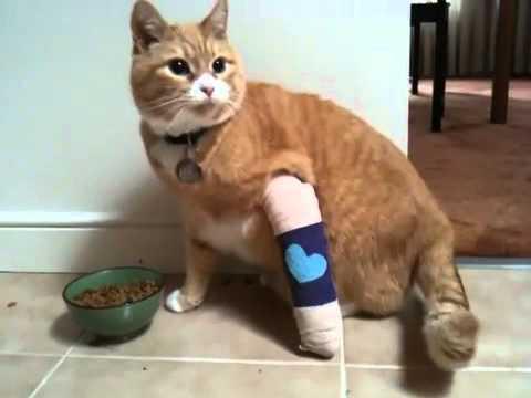Cats Leg Is Broken In Two Can I Splint It