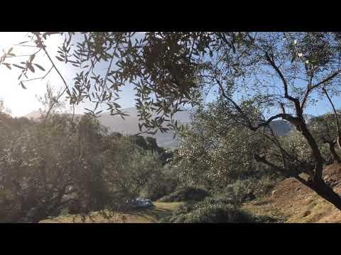 OLIFE.bio Early Organic Olive Harvest Oct/Nov 2019 - Egialia, Peloponnese, Greece