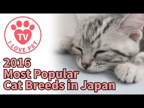 [PET info#5]2016 Most Popular Cat Breeds in Japan TOP10 - lovely cats